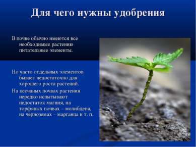 Для чего нужны удобрения В почве обычно имеются все необходимые растению пита...