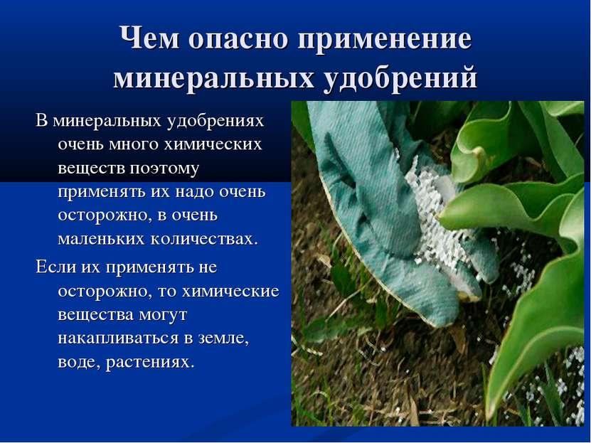 Чем опасно применение минеральных удобрений В минеральных удобрениях очень мн...