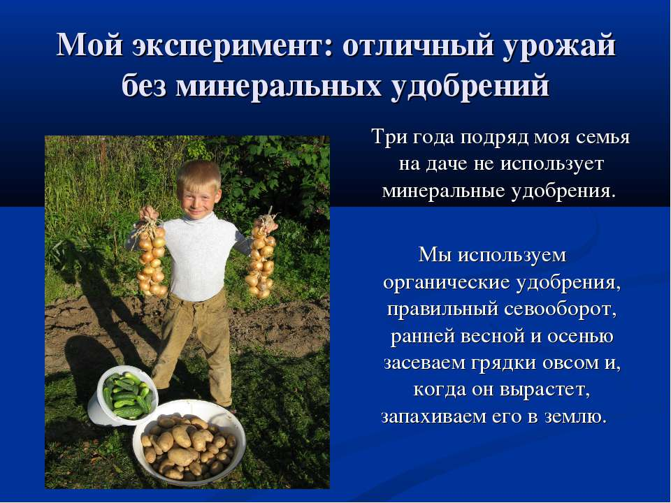 Мой эксперимент: отличный урожай без минеральных удобрений Три года подряд мо...