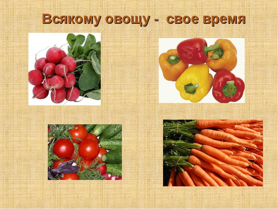 Всякому овощу - свое время