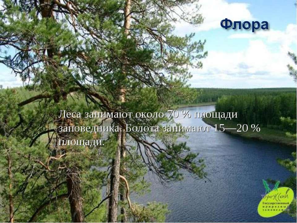 Леса занимают около 70% площади заповедника. Болота занимают 15—20% площади.