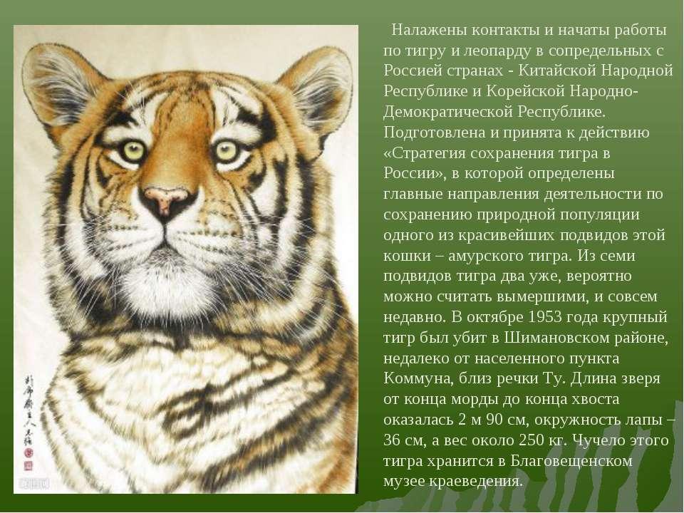 Налажены контакты и начаты работы по тигру и леопарду в сопредельных с Россие...