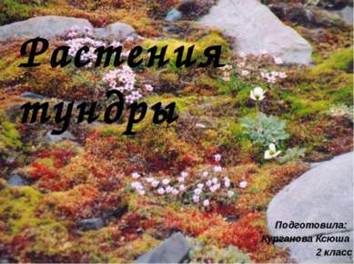 Растения тундры Подготовила: Курганова Ксюша 2 класс