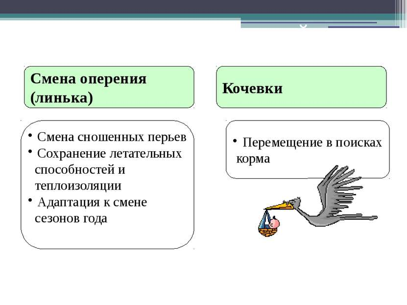 Послегнездовой период Смена оперения (линька) Кочевки Смена сношенных перьев ...