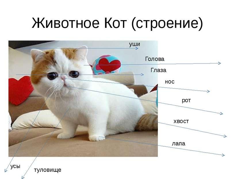 Животное Кот (строение) уши Голова Глаза нос рот хвост лапа туловище усы