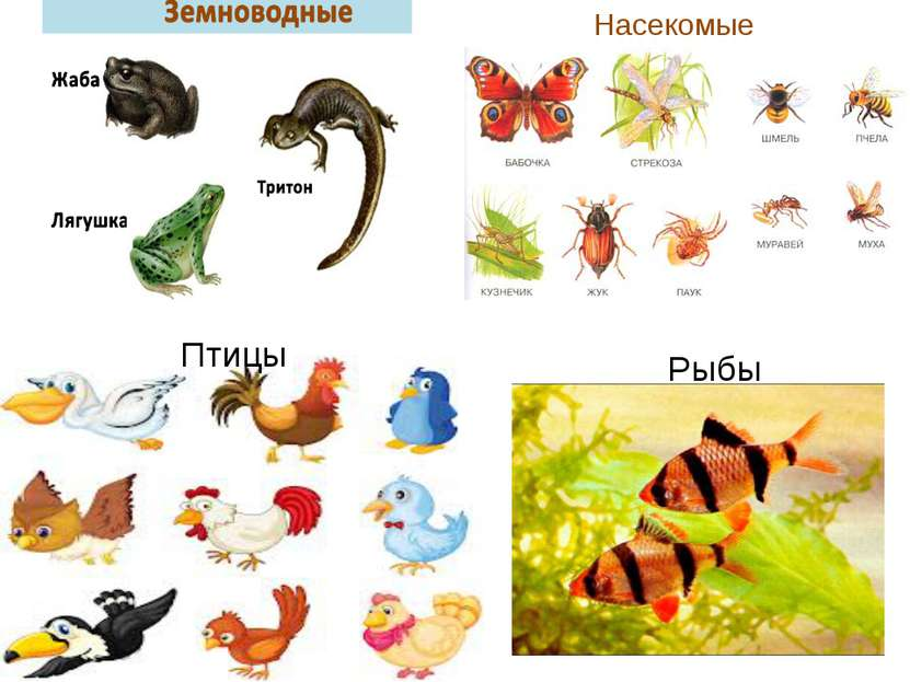 Насекомые Птицы Рыбы