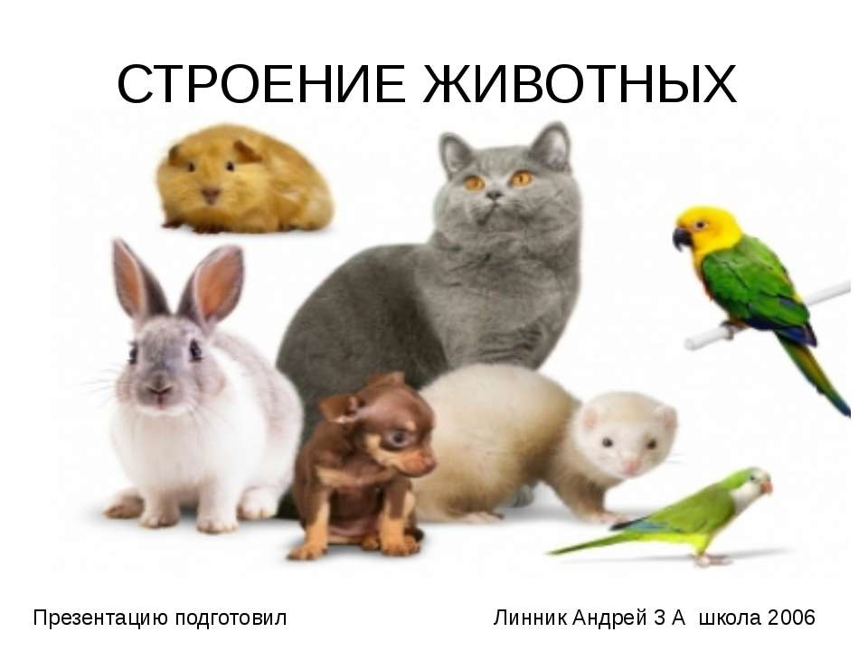 СТРОЕНИЕ ЖИВОТНЫХ Презентацию подготовил Линник Андрей 3 А школа 2006