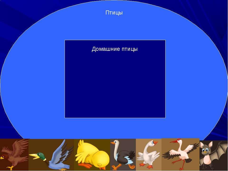 Подмножество Птицы Домашние птицы