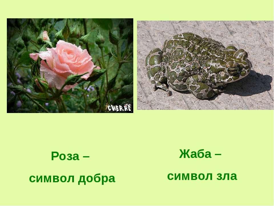 Роза – символ добра Жаба – символ зла