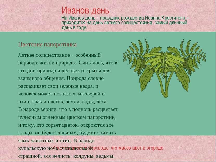Цветение папоротника Красная девка в хороводе, что маков цвет в огороде Летне...