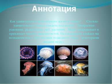 Аннотация Как удивительна и разнообразна жизнь в океане! Столько удивительног...