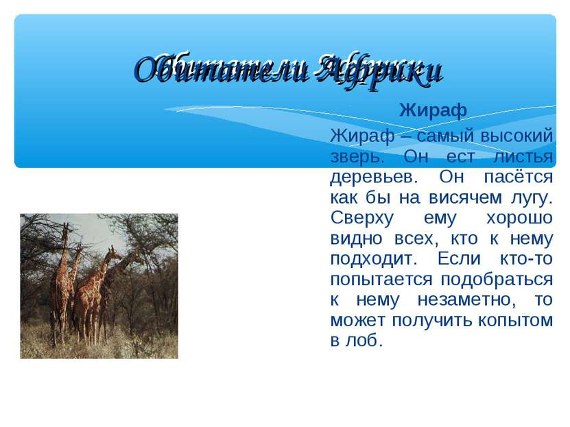 Обитатели Африки Жираф Жираф – самый высокий зверь. Он ест листья деревьев. О...