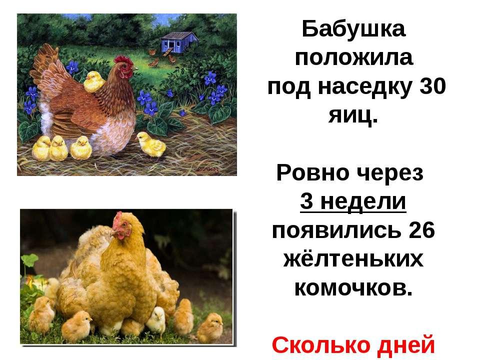 Бабушка положила под наседку 30 яиц. Ровно через 3 недели появились 26 жёлтен...