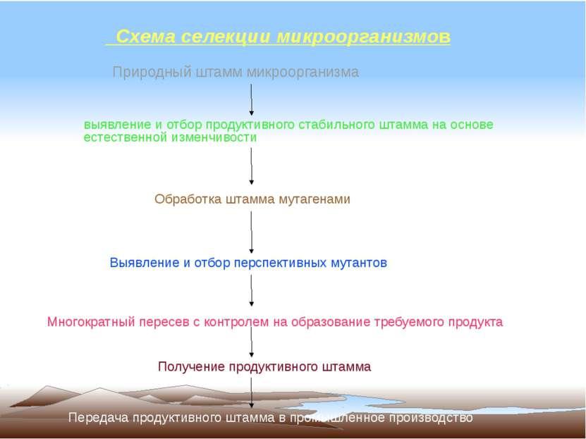 Схема селекции микроорганизмов Природный штамм микроорганизма выявление и отб...