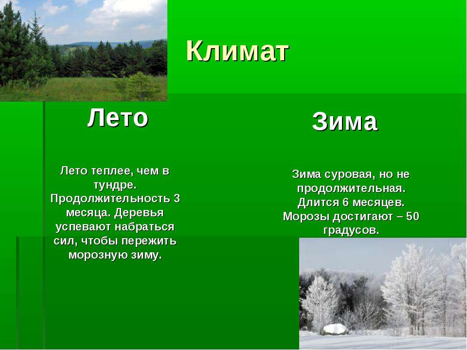 Климат Лето Зима Лето теплее, чем в тундре. Продолжительность 3 месяца. Дерев...