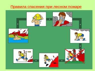 Правила спасения при лесном пожаре