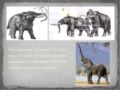 Рост мамонта составлял 3-4 метра, вес – 5-6 тонн. По биологическим признакам ...
