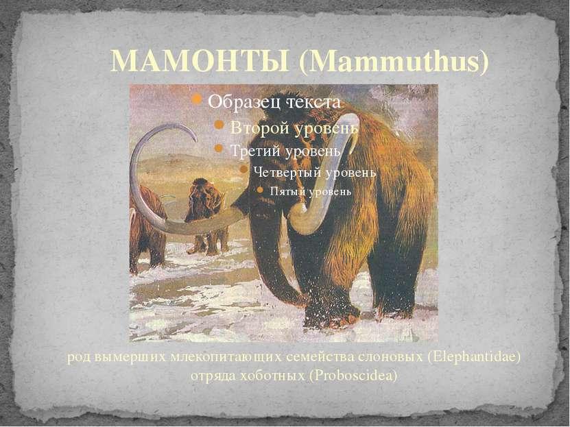 род вымерших млекопитающих семейства слоновых (Elephantidae) отряда хоботных ...