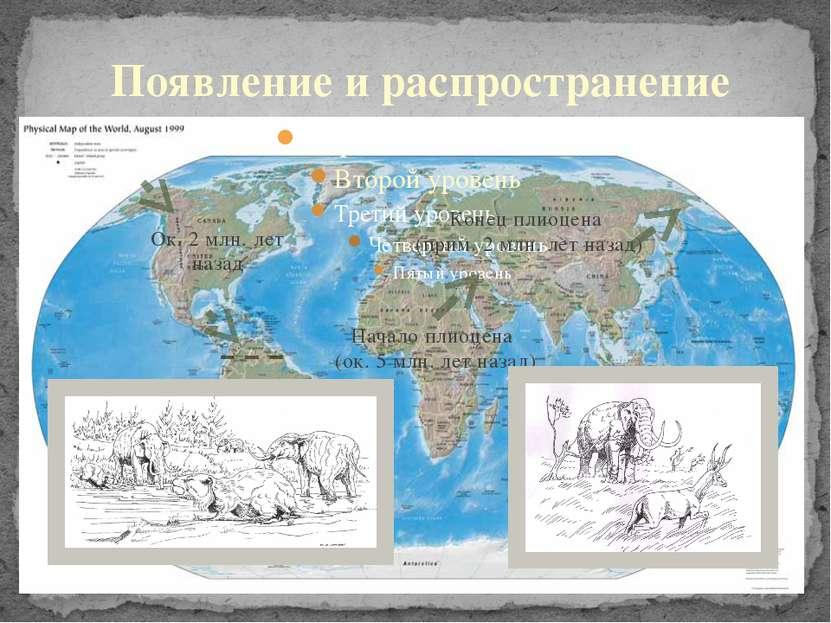 Появление и распространение Начало плиоцена (ок. 5 млн. лет назад) Конец плио...