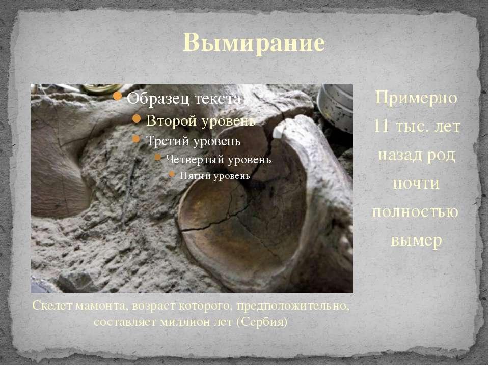 Скелет мамонта, возраст которого, предположительно, составляет миллион лет (С...