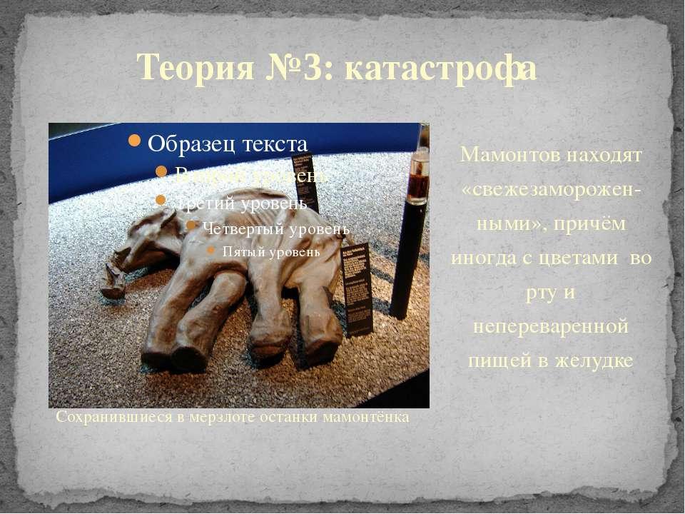 Сохранившиеся в мерзлоте останки мамонтёнка Теория №3: катастрофа Мамонтов на...