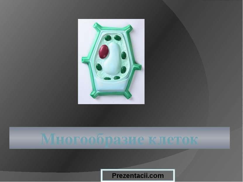 Многообразие клеток Prezentacii.com
