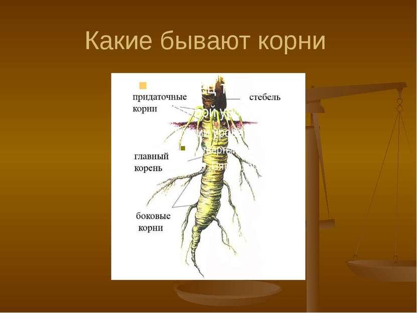Какие бывают корни