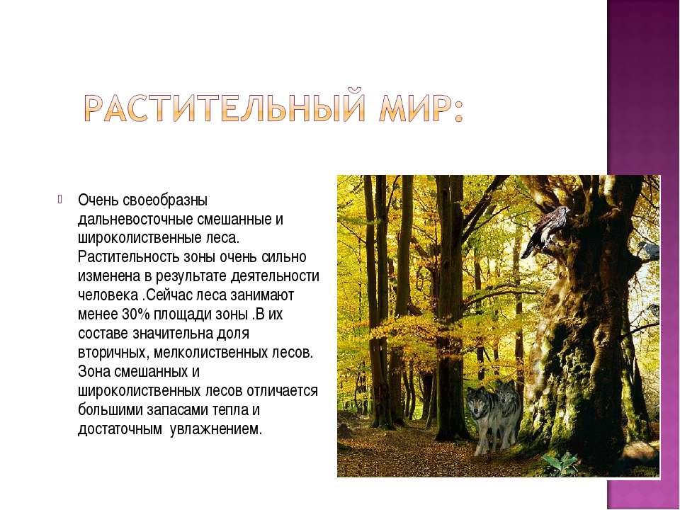 Очень своеобразны дальневосточные смешанные и широколиственные леса. Растител...