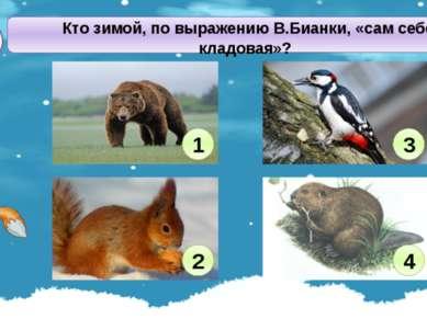 Кто зимой, по выражению В.Бианки, «сам себе кладовая»? В1 1 2 3 4