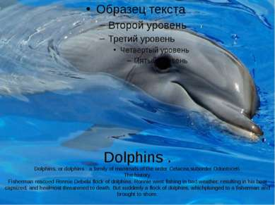 Dolphins . Dolphins, or dolphins - a family of mammals of the order Cetacea,s...