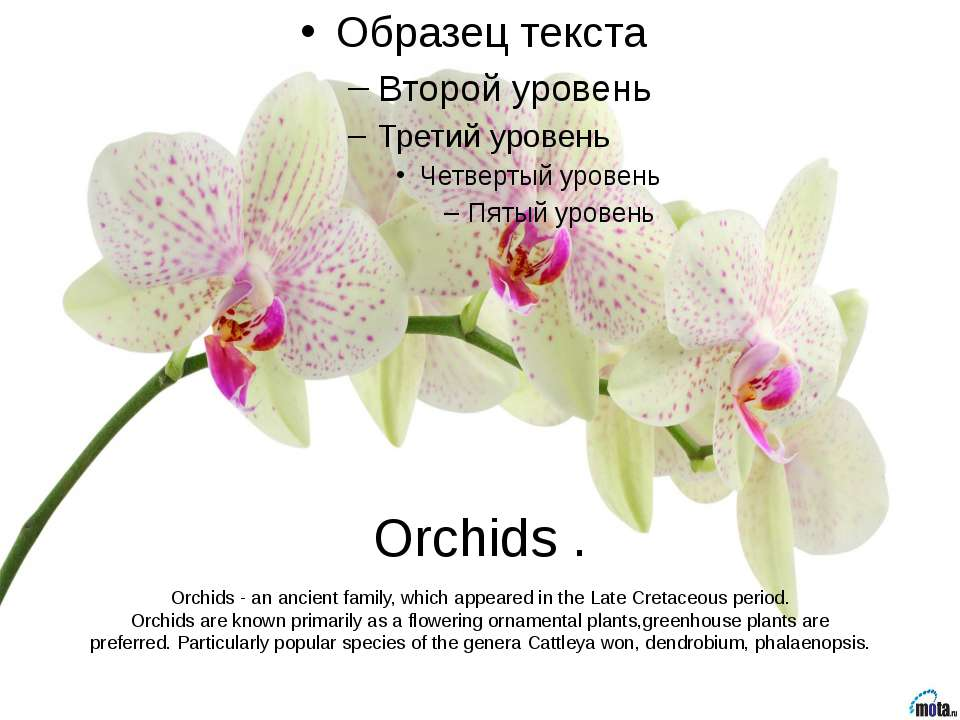 Orchids . Orchids - an ancient family, which appeared in the Late Cretaceous ...