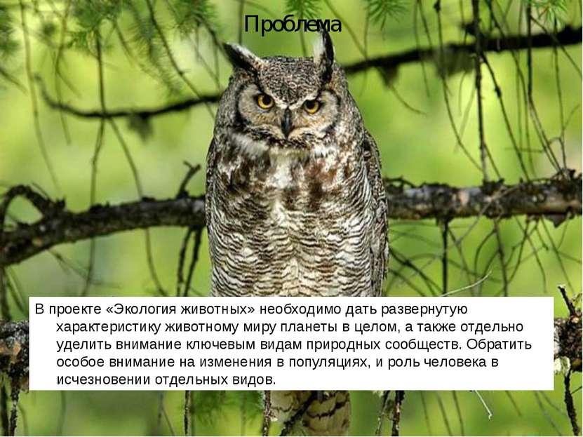 Проблема В проекте «Экология животных» необходимо дать развернутую характерис...