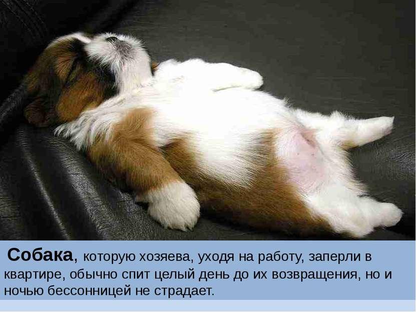 Собака, которую хозяева, уходя на работу, заперли в квартире, обычно спит цел...