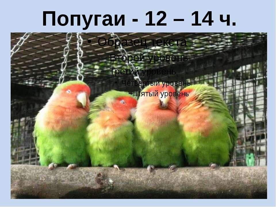 Попугаи - 12 – 14 ч.