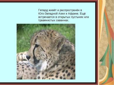 Гепард живёт и распространён в Юго-Западной Азии и Африке. Ещё встречается в ...