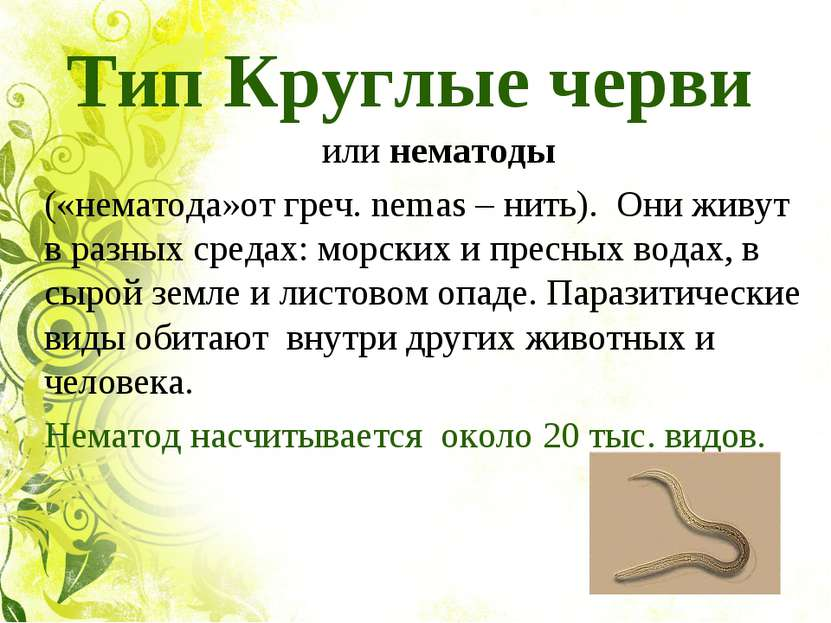 Тип Круглые черви илинематоды («нематода»от греч. nemas – нить). Они живут...