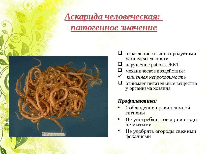 Аскарида человеческая: патогенное значение отравление хозяина продуктами жизн...