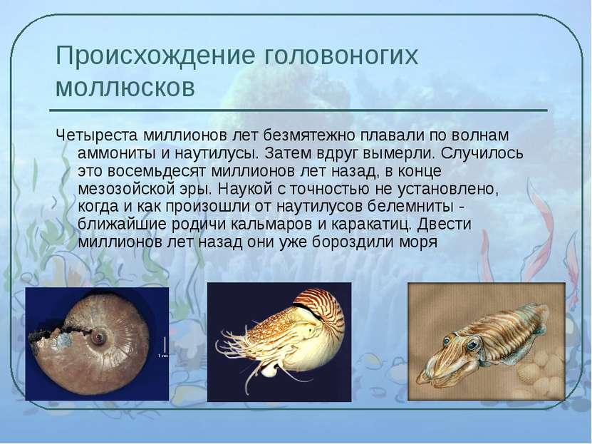 Происхождение головоногих моллюсков Четыреста миллионов лет безмятежно плавал...
