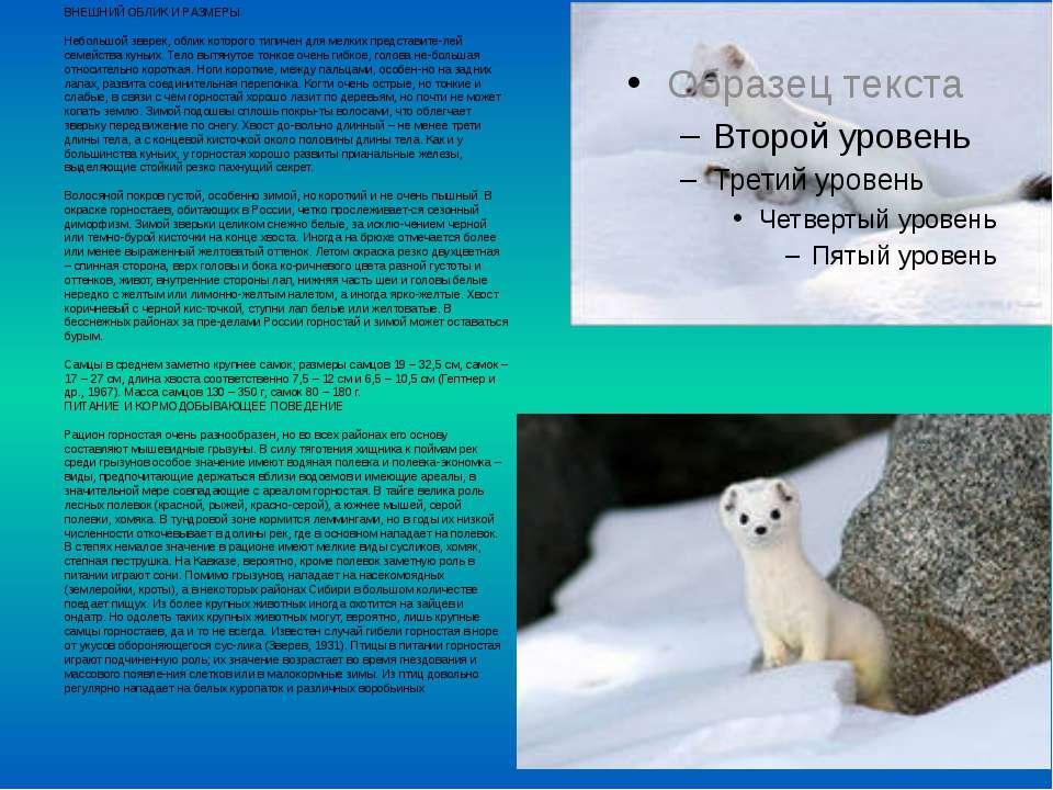 ВНЕШНИЙ ОБЛИК И РАЗМЕРЫ Небольшой зверек, облик которого типичен для мелких п...