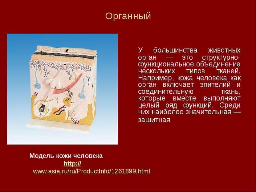 Органный У большинства животных орган — это структурно-функциональное объедин...