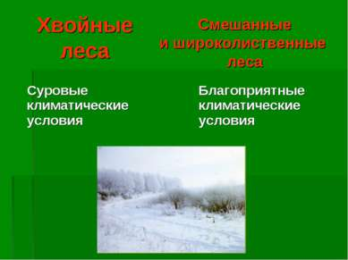 Хвойные леса Смешанные и широколиственные леса Суровые климатические условия ...