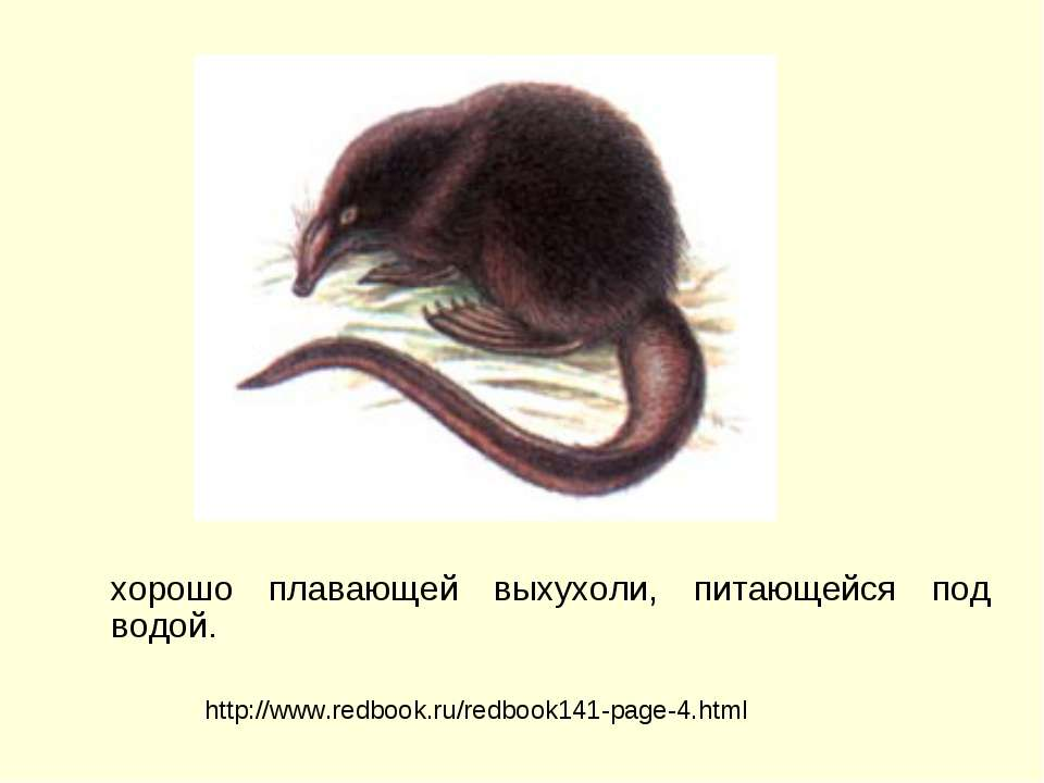 хорошо плавающей выхухоли, питающейся под водой. http://www.redbook.ru/redboo...