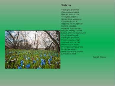 Черёмуха Черёмуха душистая С весною расцвела И ветки золотистые, Что кудри, з...