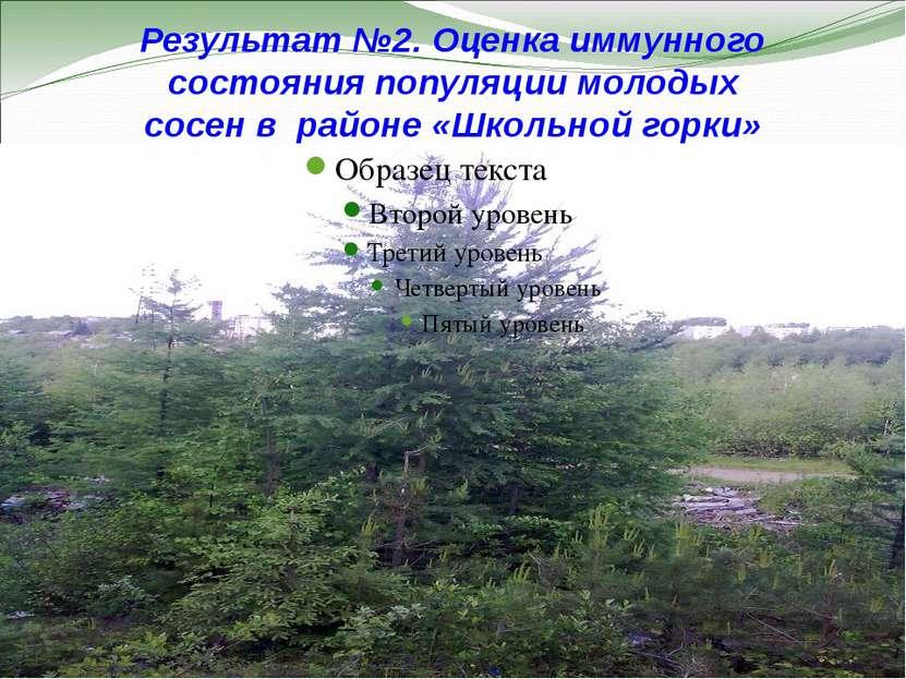 Результат №2. Оценка иммунного состояния популяции молодых сосен в районе «Шк...