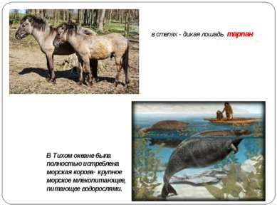 в степях - дикая лошадь тарпан В Тихом океане была полностью истреблена морск...