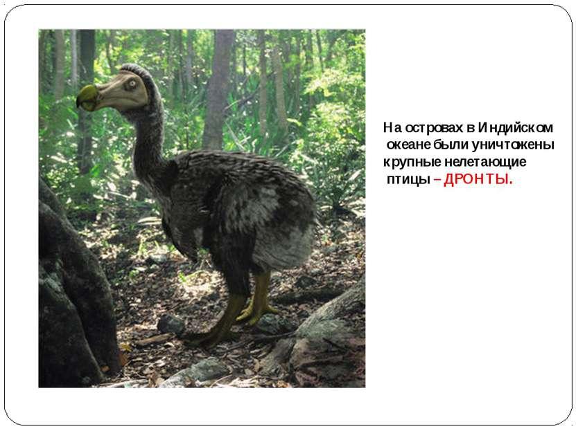 На островах в Индийском океане были уничтожены крупные нелетающие птицы – ДРО...