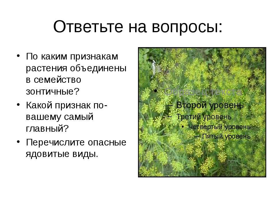Ответьте на вопросы: По каким признакам растения объединены в семейство зонти...