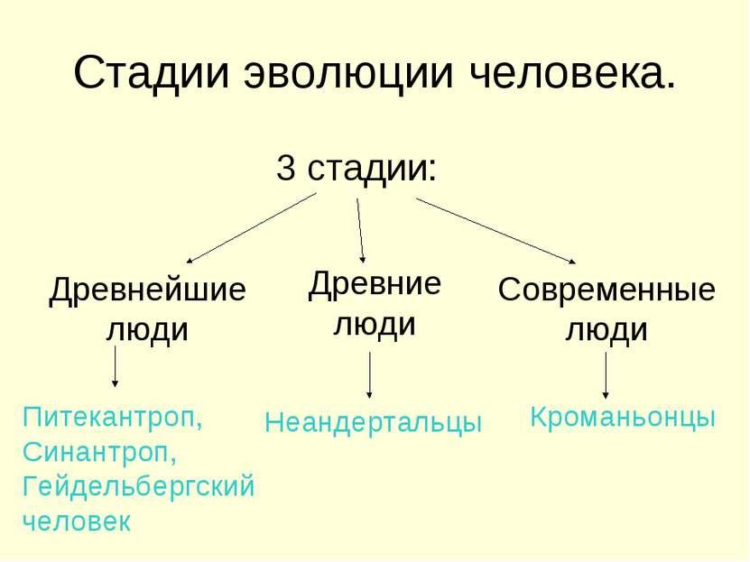 Стадии эволюции человека. 3 стадии: Древнейшие люди Древние люди Современные ...