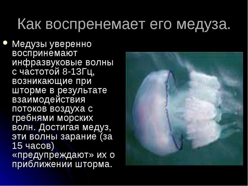 Как воспренемает его медуза. Медузы уверенно воспринемают инфразвуковые волны...