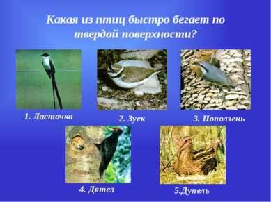 Какая из птиц быстро бегает по твердой поверхности? 1. Ласточка 2. Зуек 3. По...